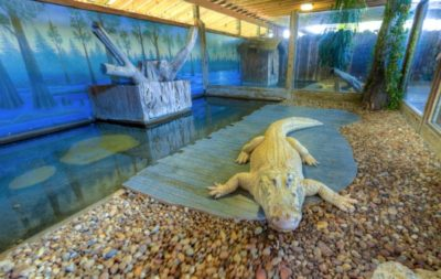 gatorland experiential virtual tour